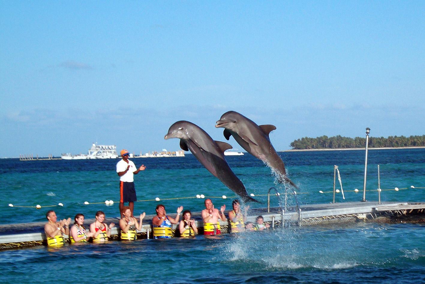 Resultado de imagen para nadar con delfines   en punta cana